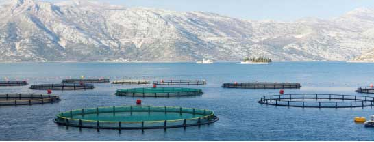 Recirculating Aquaculture System